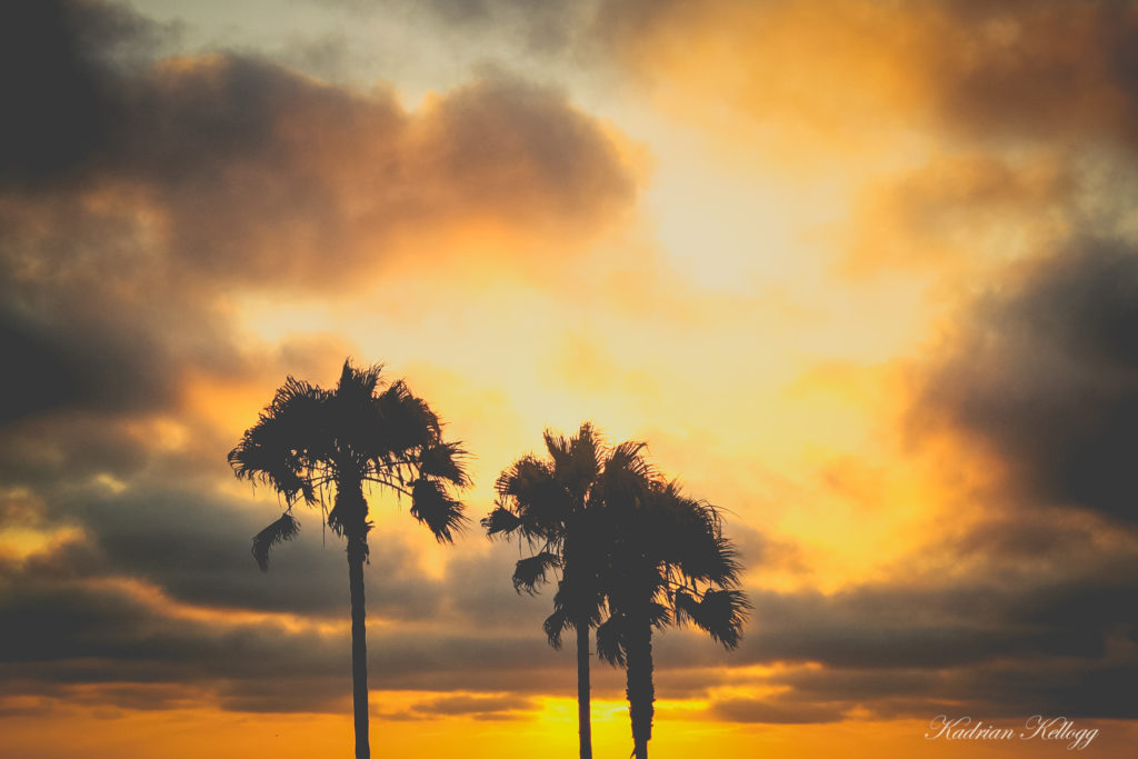 Silhouette of palm trees and Venice Beach during sunset.